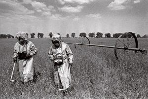 radioactivitate agricultura