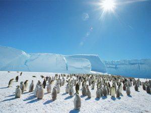 pinguini-antarctica